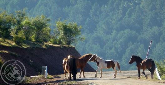 Montenegro_de_Cameros_Caballos1