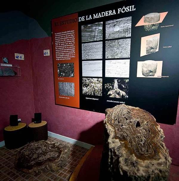 Troncos fosilizados. Foto Miguel Muñoz Romero