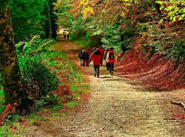 Paseo otoñal por la Selva de Irati . Foto Turismo Reyno de Navarra